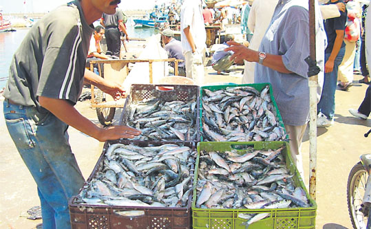 La traçabilité tout au long de la chaîne d'approvisionnement  témoigne de l'origine légale des captures. Ce qui constitue un outil efficace pour combattre la pêche illicite et non réglementée .