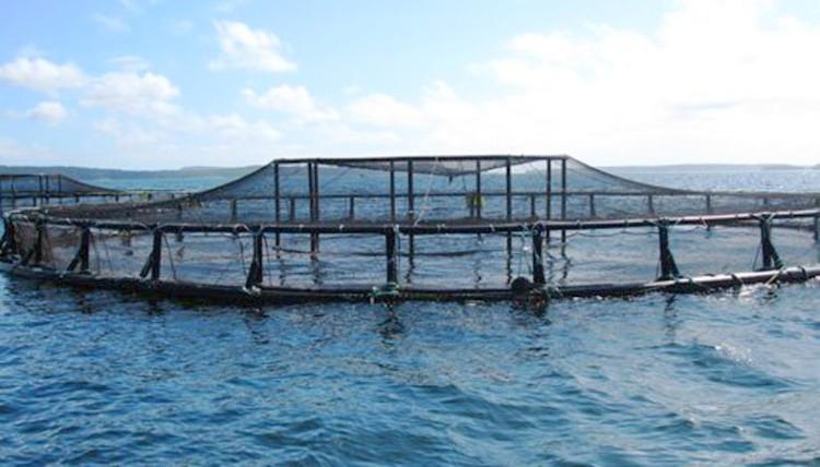 aquaculture-landa