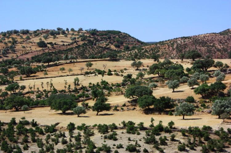 Arganeraie-Maroc
