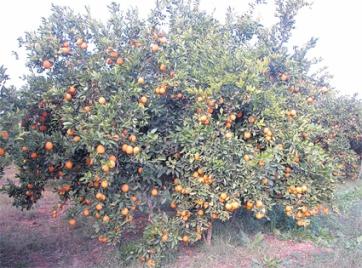 oranger_059