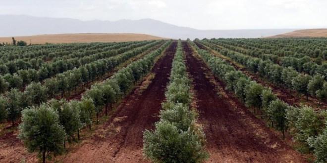 Maroc-FAO-atelier-projet-terres-durable-e1464276016499