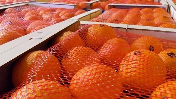 La Russie est le premier client du Maroc en agrumes. La chute du rouble freinera la filière export.